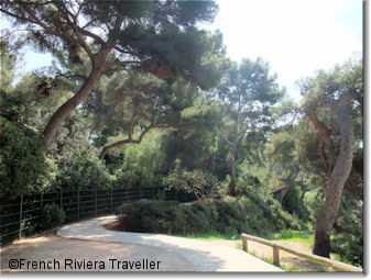 Woodsy path on Saint-Jean Cap Ferrat